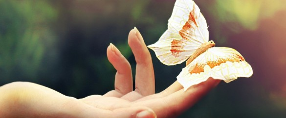 yellow_butterfly